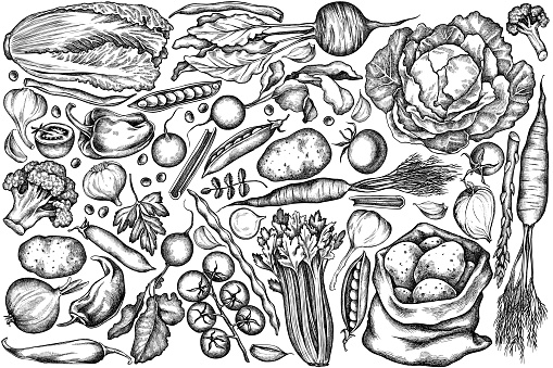 Vector set of hand drawn black and white onion, garlic, pepper, broccoli, radish, green beans, potatoes, cherry tomatoes, peas, celery, beet, greenery, chinese cabbage, cabbage, carrot