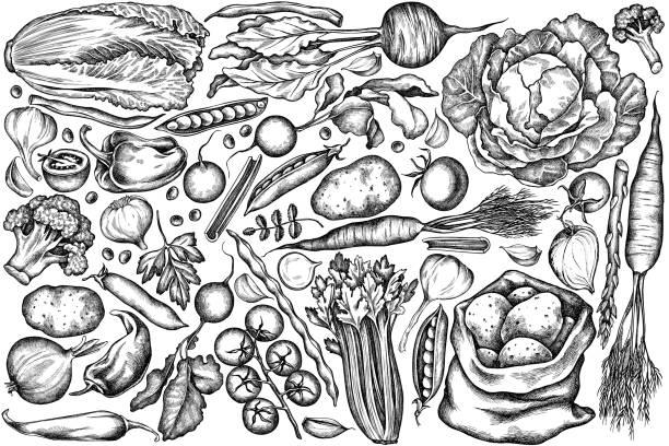 illustrations, cliparts, dessins animés et icônes de ensemble vectoriel d'oignon noir et blanc dessiné à la main, ail, poivre, brocoli, radis, haricots verts, pommes de terre, tomates cerises, pois, céleri, betterave, verdure, chou chinois, chou, carotte - légume