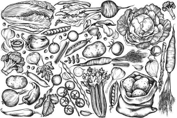 Vector set of hand drawn black and white onion, garlic, pepper, broccoli, radish, green beans, potatoes, cherry tomatoes, peas, celery, beet, greenery, chinese cabbage, cabbage, carrot Vector set of hand drawn black and white onion, garlic, pepper, broccoli, radish, green beans, potatoes, cherry tomatoes, peas, celery, beet, greenery, chinese cabbage, cabbage, carrot stock illustration fruit drawings stock illustrations