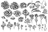 istock Vector set of hand drawn black and white wax flower, forget me not flower, tansy, ardisia, brassica, decorative cabbage 1283099283