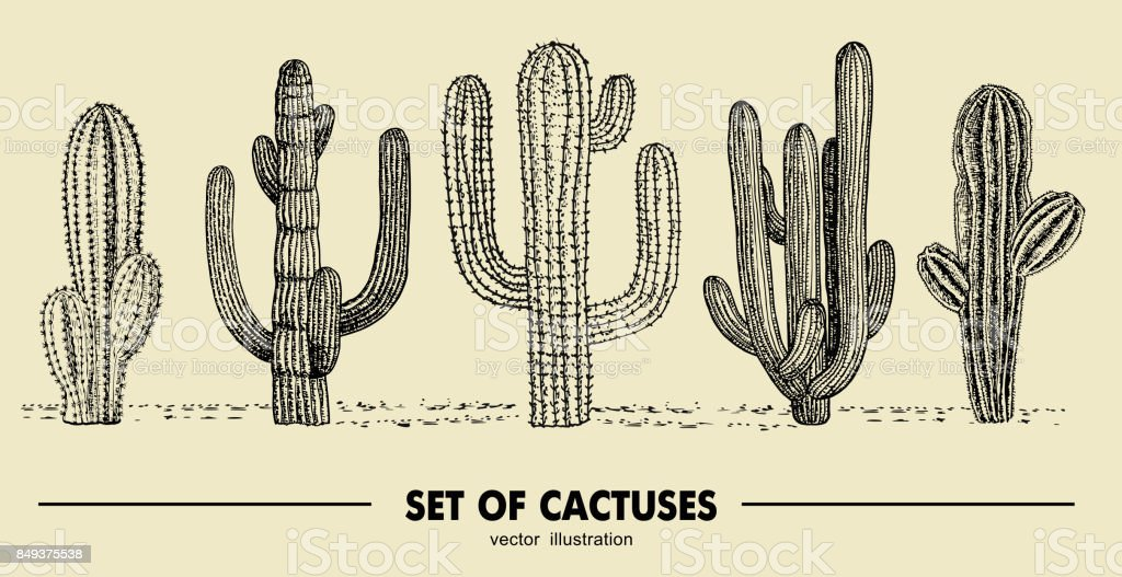 Vector set of hand drawn cactus. Sketch illustration. Different cactuses in monochrome style vector art illustration