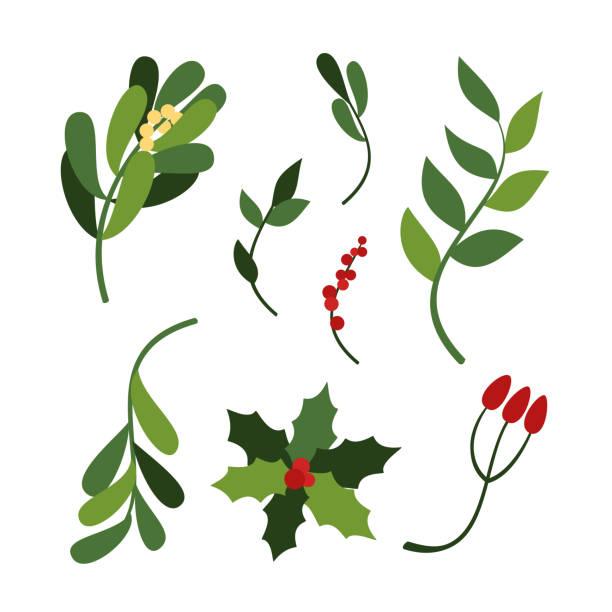 vektor-set von hand gezeichnet weihnachten urlaub grüne blätter und zweige holly, misteln. - beere pflanzenbestandteile stock-grafiken, -clipart, -cartoons und -symbole