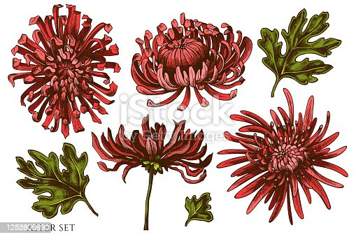 istock Vector set of hand drawn colored aster 1253805690
