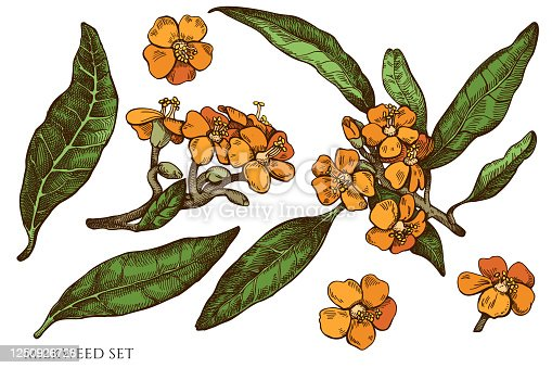Vector set of hand drawn colored  milkweed stock illustration