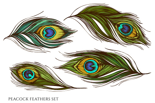 Vector set of hand drawn colored peacock feathers