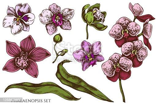 Vector set of hand drawn colored phalaenopsis stock illustration