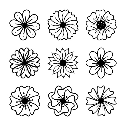 Vector set of hand drawn daisy flower or wildflowers isolated on white background. Floral illustration for greeting card, wedding design, invitation, print, t shirt. Floral collection.