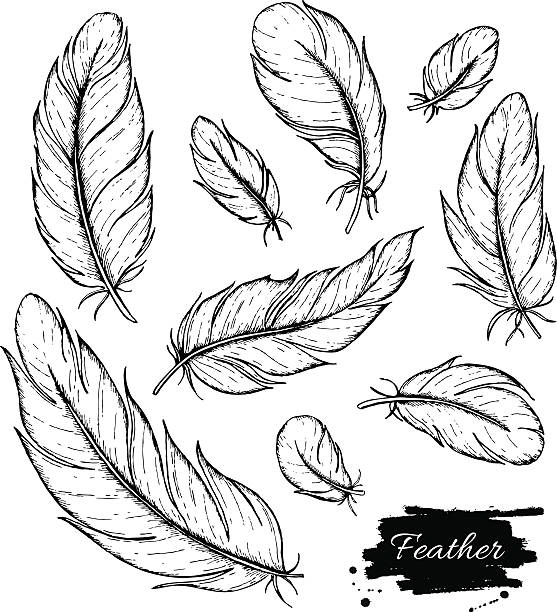 Vector set of hand drawn feather. Ink vintage illustration Vector set of hand drawn feather. Ink vintage illustration. Isolated detailed drawing on white background. bristle animal part stock illustrations