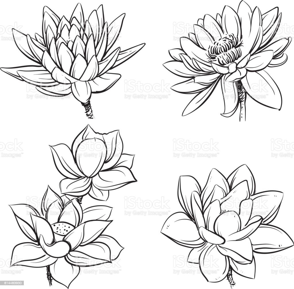 Vector Set Of Hand Drawn Lotus Flowers Sketch Floral Botany