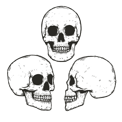 Vector set Of hand drawn monochrome human skulls