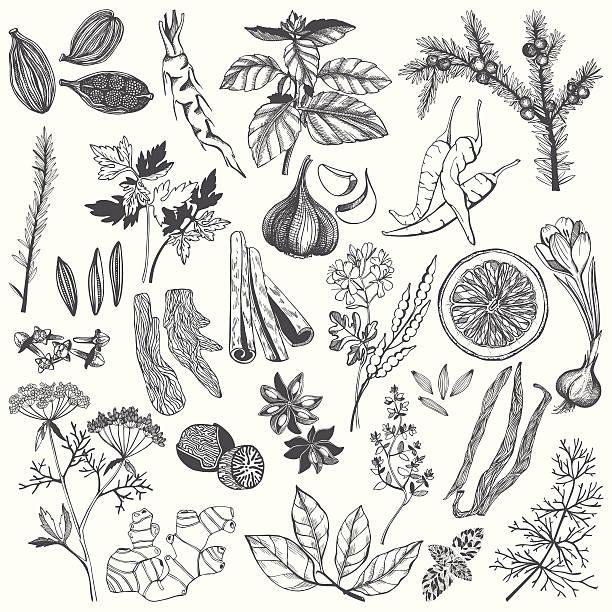 ilustraciones, imágenes clip art, dibujos animados e iconos de stock de conjunto de vectores dibujados a mano las especias y hierbas - comida india