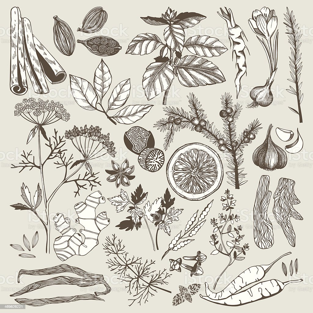 Vector set of hand drawn spices and herbs vector art illustration