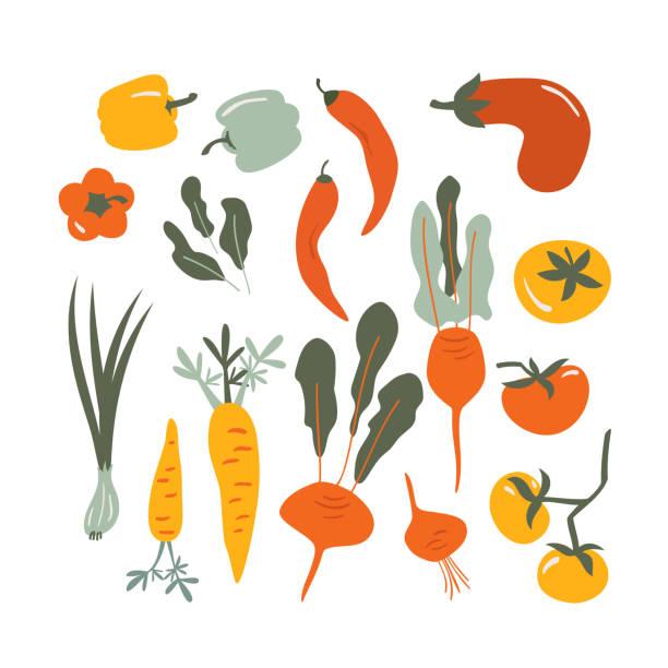 ilustraciones, imágenes clip art, dibujos animados e iconos de stock de conjunto vectorial de verduras dibujadas a mano - vegetal