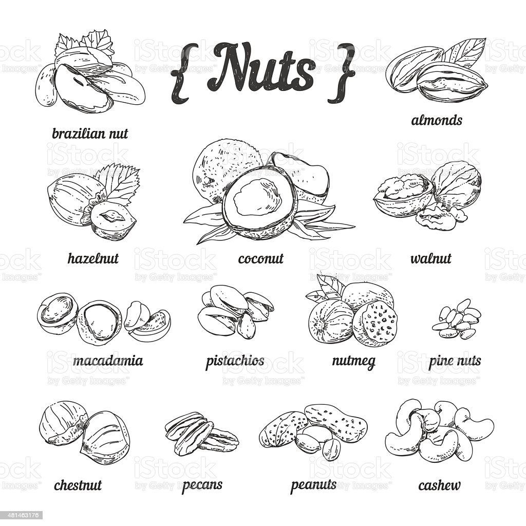 Vector set of hand sketched nuts in vintage style vector art illustration