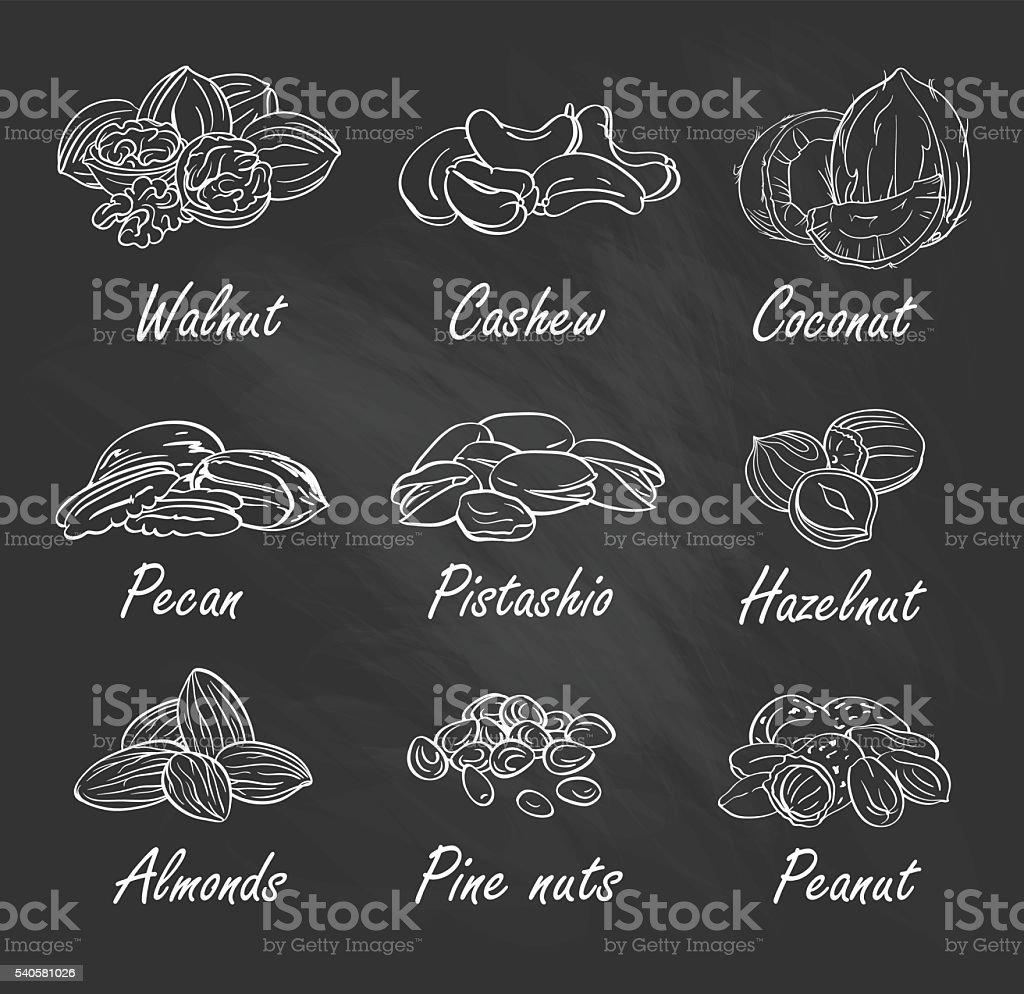 Vector set of hand sketched nuts on chalkboard. vector art illustration
