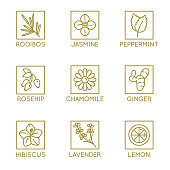 Vector set of herbal organic tea badges and icons in linear style