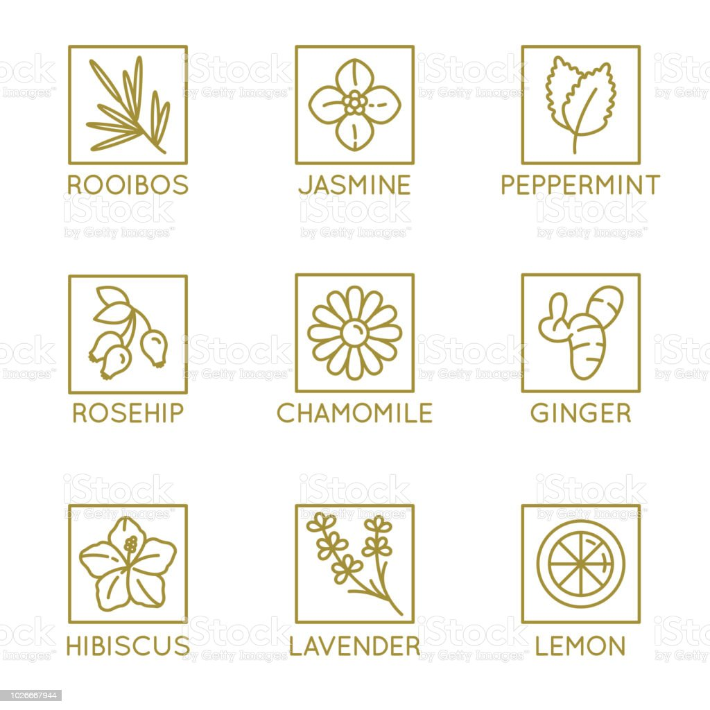 Vector set of herbal organic tea badges and icons in linear style vector art illustration