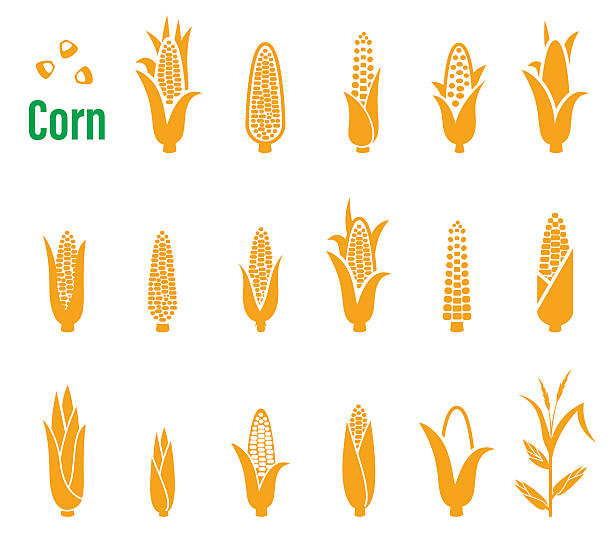 Vector set of icons and logos with corn on a vector art illustration