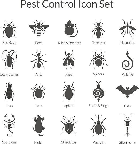 Vector set of icons with insects for pest control business Vector black and white icons of different insects like scorpions, stink bugs, bed bugs, weevils and termites for pest control companies. Included some animals like bats, moles, mice and snakes. fly insect stock illustrations