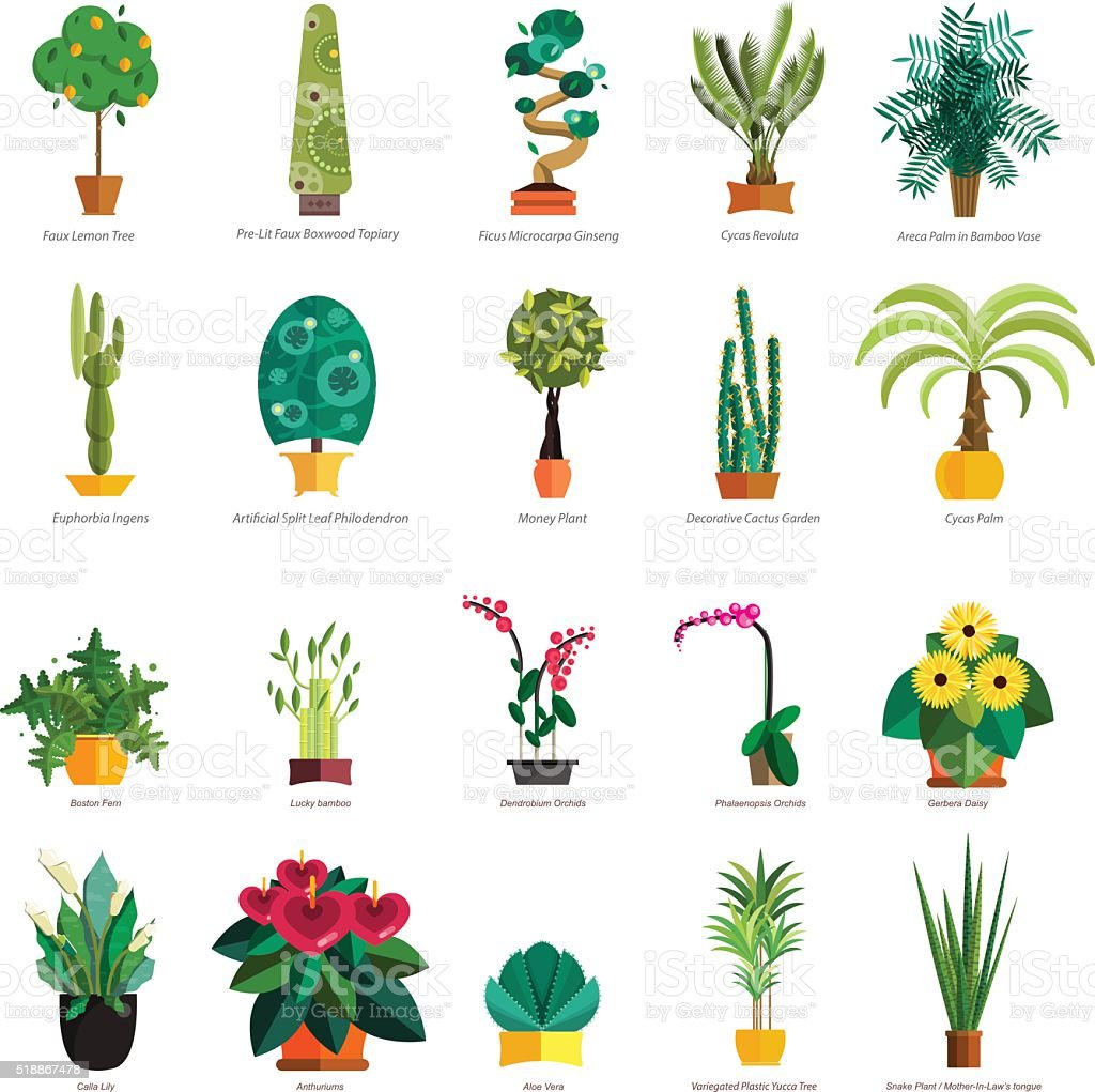 Vector Set Of Indoor Tree Home Plants In Pots Illustration Stock Illustration Download Image Now Istock