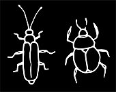 Vector set of isolated beetle elements drawn by hand in a doodle style. funny thick and long and narrow beatles with long mustache white outline on black background for design template