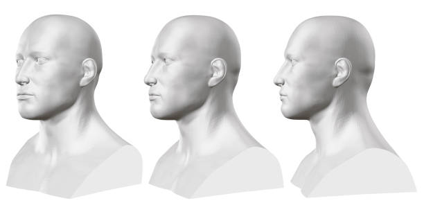 Vector set of isolated male busts of mannequins on white background. 3D. Male bust from different sides. Vector illustration Vector set of isolated male busts of mannequins on white background. 3D. Male bust from different sides. Vector illustration. human head stock illustrations