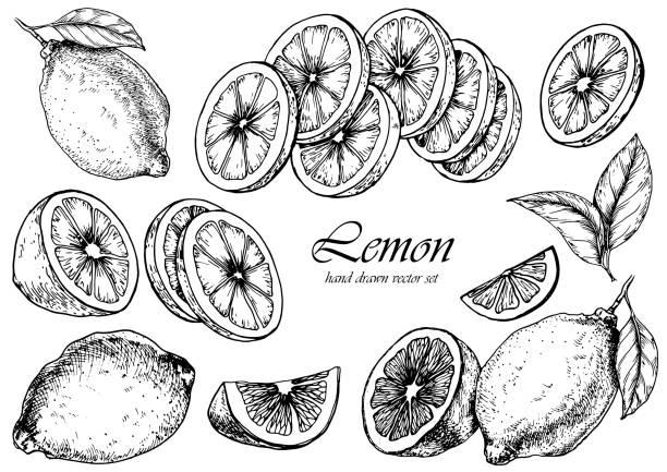 illustrazioni stock, clip art, cartoni animati e icone di tendenza di vector set of lemon fruits. - illustrazioni di limone