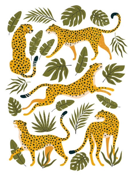 Vector set of leopards or cheetahs and tropical leaves. Trendy illustration. Vector set of leopards or cheetahs and tropical leaves. Trendy illustration. jaguar stock illustrations