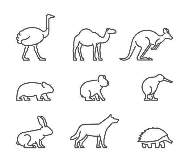 stockillustraties, clipart, cartoons en iconen met vector set van lineaire australische dieren - struisvogel
