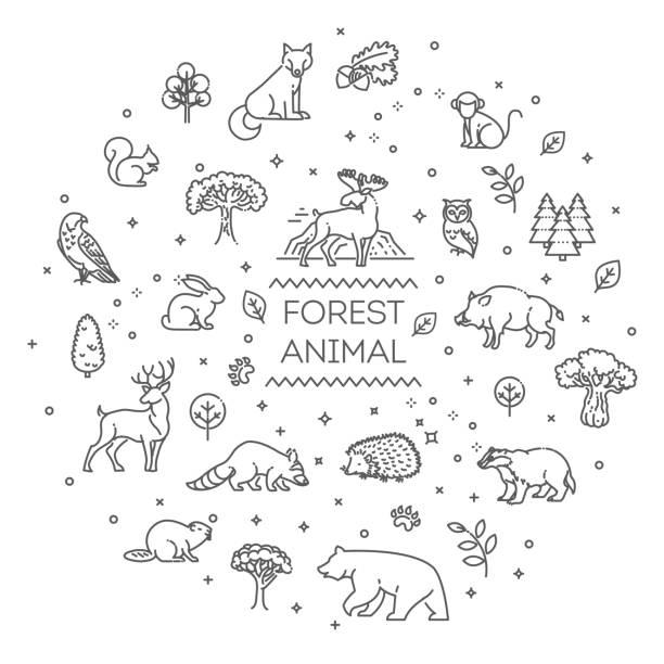 illustrazioni stock, clip art, cartoni animati e icone di tendenza di vettore. insieme di animali della foresta vettoriale lineare - fauna selvatica