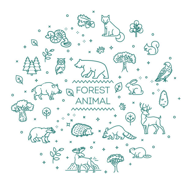 Vector. Set of linear vector forest animals Line forest wildlife concept with different animals animal stock illustrations
