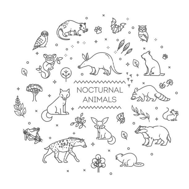stockillustraties, clipart, cartoons en iconen met vector. reeks lineaire vector nachtdieren - hyena