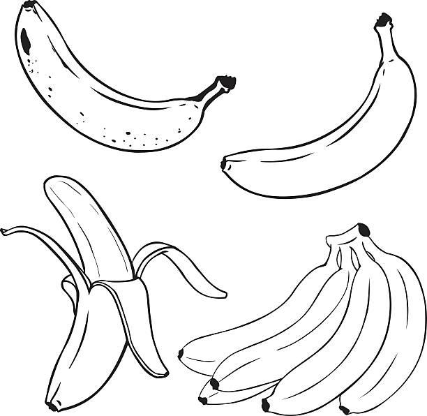 Vector Set of Line-Art Yellow Bananas. Vector Set of Line-Art Yellow Bananas. Overripe Banana, Single Banana , Peeled Banana, Bunch of Bananas. banana drawings stock illustrations