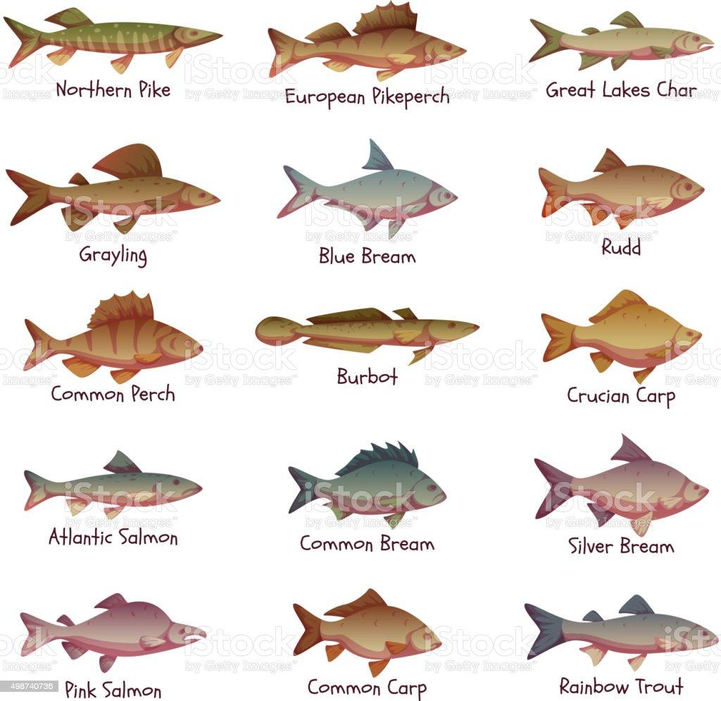 Wektor zestaw ryby s odkowodne najbardziej popularnych for Nys fishing license prices