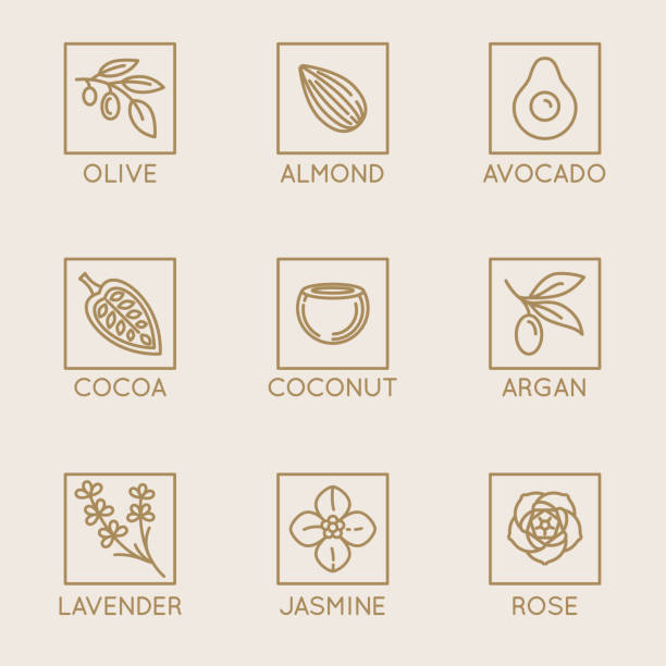 Vector set of natural ingredients and oils for cosmetics in linear style - packaging design templates and emblems Vector set of natural ingredients and oils for cosmetics in linear style - packaging design templates and emblems - olive, almond, avocado, cocoa, coconut, argan, lavender, jasmine and rose lavender plant stock illustrations