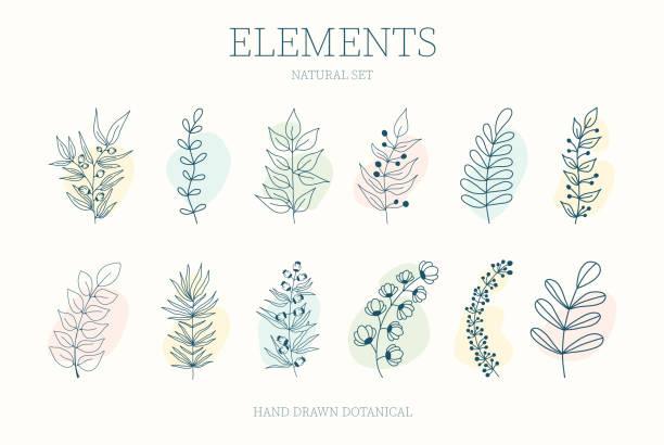 원이 있는 괴상한 요소의 벡터 세트 - 꽃 식물 stock illustrations