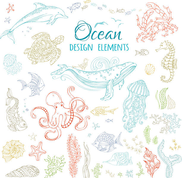 Vector set of ocean animals and plants. Colourful contours isolated on white. Whale, octopus, dolphin, turtle, fish, starfish, crab, shell, jellyfish, seahorse, seaweed. Underwater sea life. marine life stock illustrations