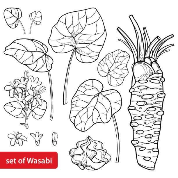 ベクトル セット概要日本語またはわさびのわさびの葉、根、生黒白い背景で隔離の花と。 - わさび点のイラスト素材/クリップアート素材/マンガ素材/アイコン素材