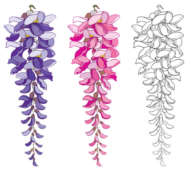 Best Wisteria Garden Illustrations, Royalty-Free Vector ...