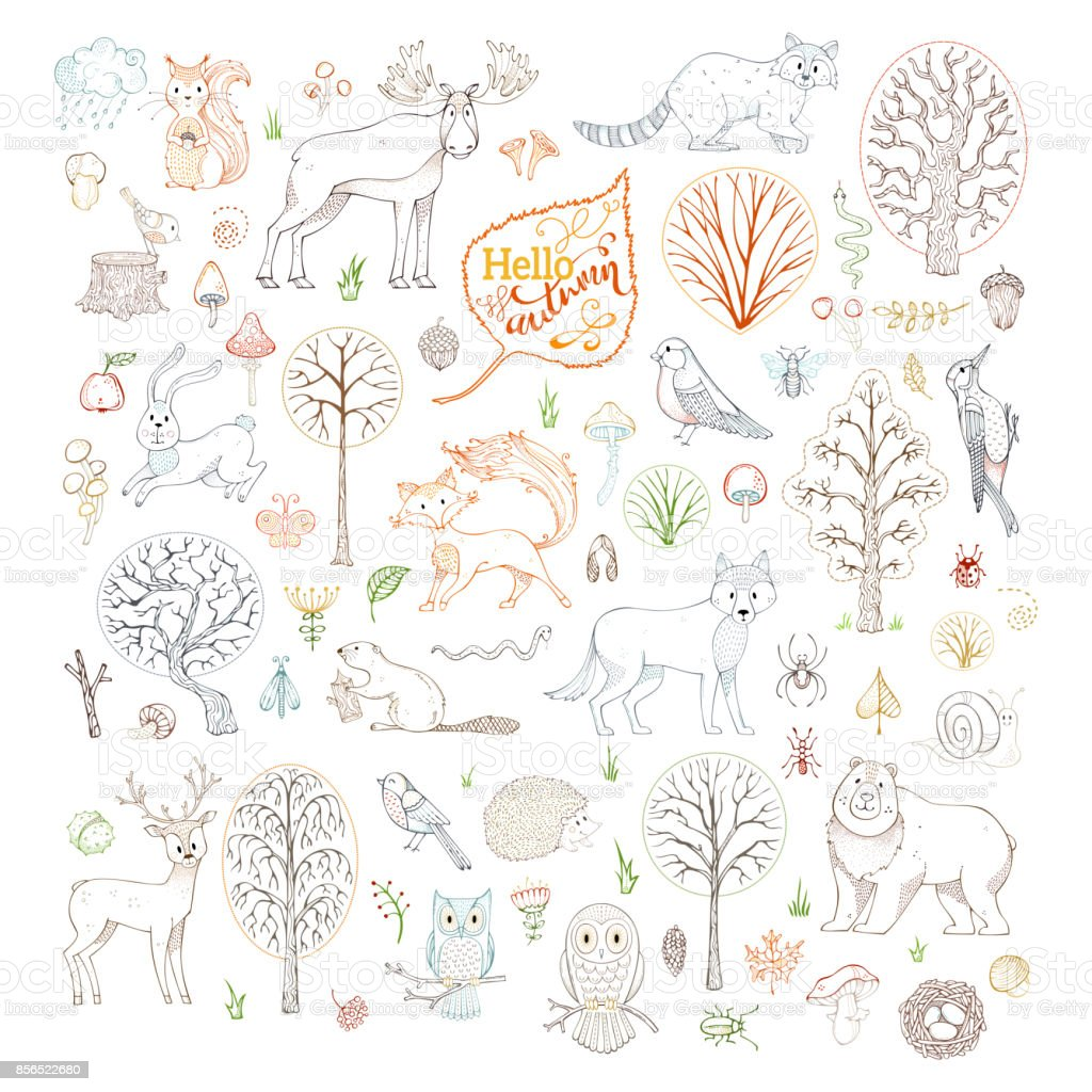 Vector set of outlined autumn forest trees, animals, birds and insects. vector art illustration