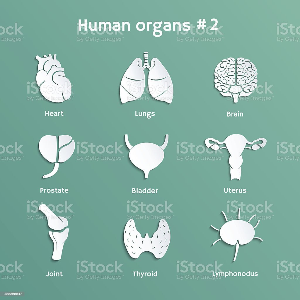 Vector Set Of Paper Cutout Icons With Human Organs Stock Vector Art ...