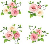 Set of four vector pink and white roses branches isolated on a white background.
