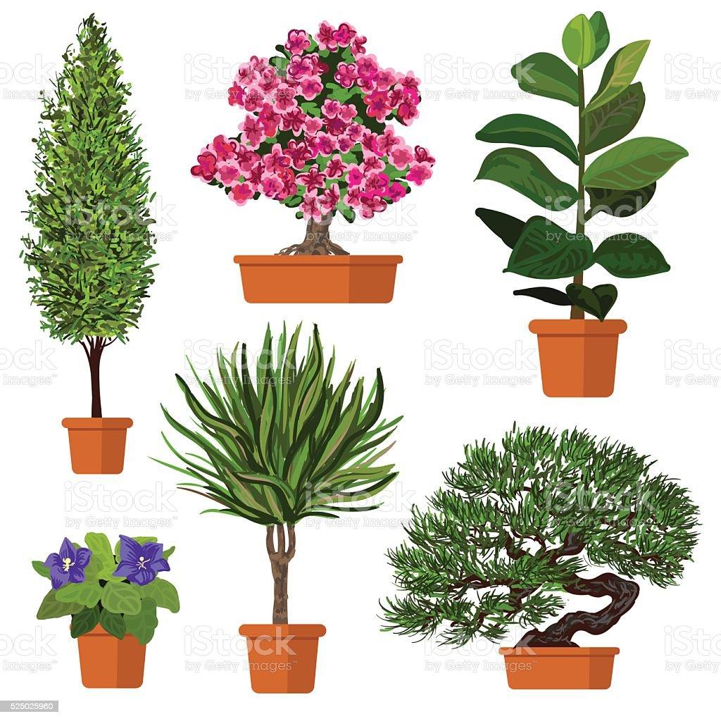 Vettoriale Gruppo di piante in vaso - illustrazione arte vettoriale