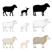 Vector Set of Ram, Sheep and Lamp. Cartoon, Sketch and Silhouette Illustrations