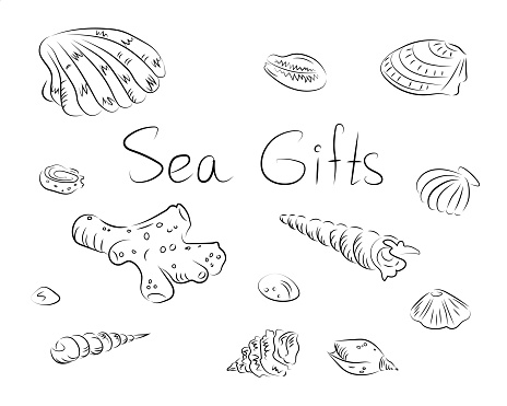 Vector set of shells and corals in black lines
