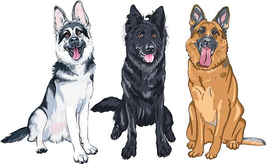 Vector set of shepherd dogs