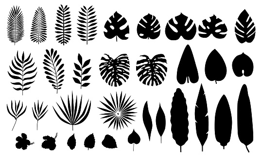 Vector set of silhouette tropical leaves, flowers.