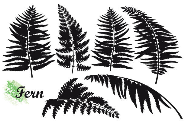 vector set of silhouettes fossil forest fern leaves in black isolated on white background. - fossilized leaves stock illustrations