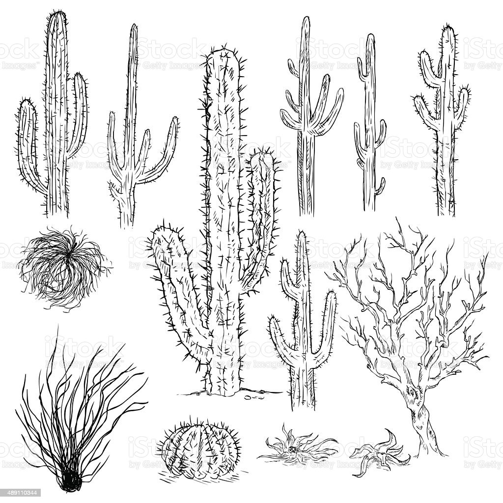 Vector Set Of Sketch Cactuses And Desert Plants Stock Vector Art U0026 More Images Of 2015 489110344 ...