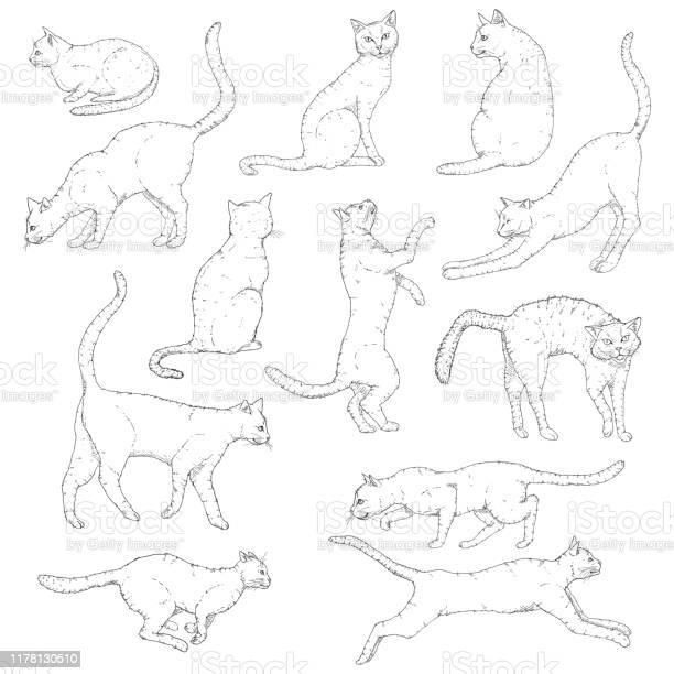 Vector set of sketch cats illustration hand drawn feline poses vector id1178130510?b=1&k=6&m=1178130510&s=612x612&h=yr5nvuxuxqit itlu254 ra3ntivym4sicsmxdo4vcg=